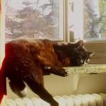 Coco Chanel har det jätte bra i solen i sitt nya hem!