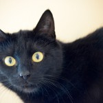 kitty02