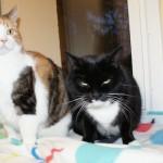 Mims och Leia